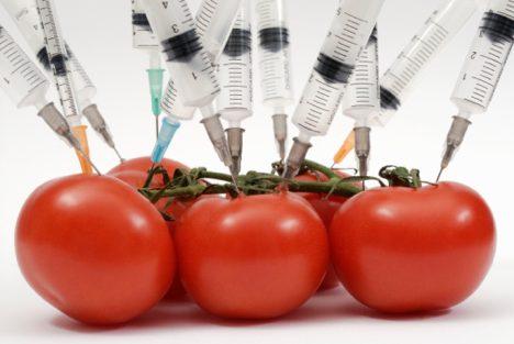 Genetically modified food risk essay
